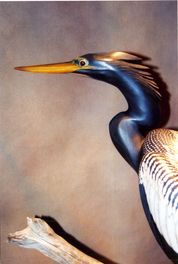 Gibian Anhinga Close Decoy