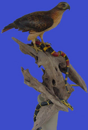 """The Opportunists,"" Red-Tailed Hawk with Coral and King Snakes"