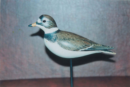 Gibian Semipalmated Plover decoy
